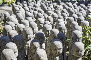 長谷寺の境内に立ち並ぶ無数の地蔵の写真素材 [FYI04811156]