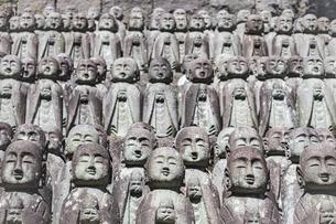 長谷寺の境内に立ち並ぶ無数の地蔵の写真素材 [FYI04811158]
