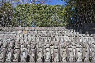 長谷寺の境内に立ち並ぶ無数の地蔵の写真素材 [FYI04811160]