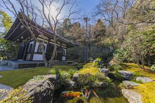 観音造立1300年を迎えた長谷寺の経蔵の写真素材 [FYI04811179]
