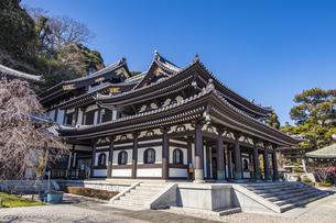 観音造立1300年を迎えた長谷寺の観音堂の写真素材 [FYI04811186]