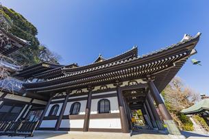 観音造立1300年を迎えた長谷寺の観音堂の写真素材 [FYI04811220]