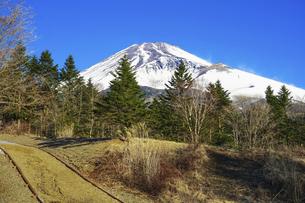 青空を背景に迫るような冬の富士山(水ヶ塚公園)の写真素材 [FYI04811334]