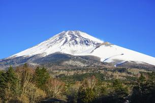 青空を背景に迫るような冬の富士山(水ヶ塚公園)の写真素材 [FYI04811339]
