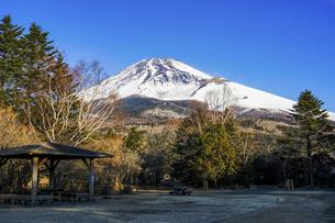 青空を背景に迫るような冬の富士山(水ヶ塚公園)の写真素材 [FYI04811342]