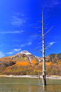 秋の上高地 梓川の清流に紅葉と冠雪の焼岳の写真素材 [FYI04811399]