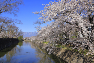 松本城公園の写真素材 [FYI04811686]