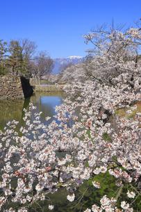 松本城公園の写真素材 [FYI04811689]