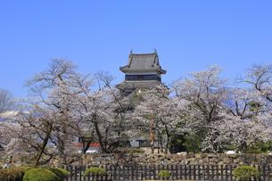 松本城公園の写真素材 [FYI04811690]