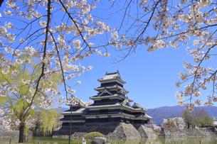 松本城公園の写真素材 [FYI04811693]