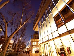 夕暮れの表参道 東京都の写真素材 [FYI04811718]