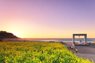 菜の花が咲く朝焼けの恋路ヶ浜に鐘の記念碑の写真素材 [FYI04812057]