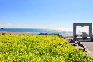 菜の花が咲く春の恋路ヶ浜に鐘の記念碑の写真素材 [FYI04812059]