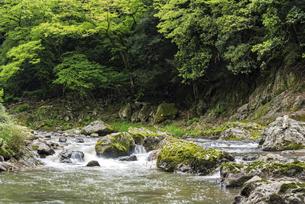 渓流の川の流れの写真素材 [FYI04812172]