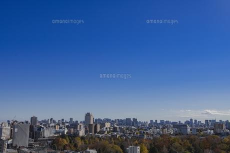 雑司ヶ谷霊園の紅葉と都心のビル群の写真素材 [FYI04812460]