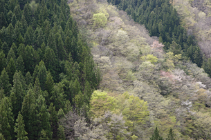 春の山の写真素材 [FYI04812509]