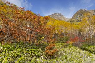 焼岳、中の湯ルートから紅葉と頂上を眺めるの写真素材 [FYI04812812]