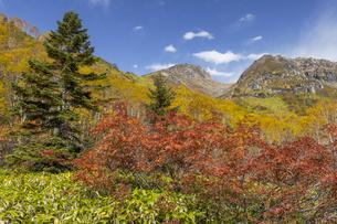焼岳頂上と中の湯ルートから紅葉の風景の写真素材 [FYI04812815]