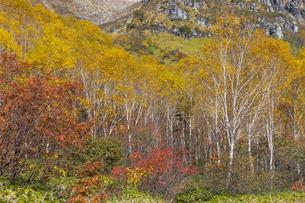 焼岳中腹の紅葉の風景の写真素材 [FYI04812822]