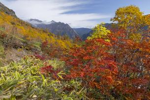 焼岳、下堀沢から紅葉と雲かかる穂高連峰の写真素材 [FYI04812823]