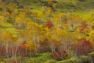 焼岳中腹の紅葉の写真素材 [FYI04812825]