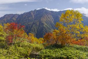 焼岳中腹から紅葉と霞沢岳の風景の写真素材 [FYI04812827]