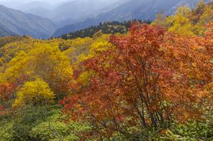 焼岳中腹から紅葉の風景の写真素材 [FYI04812829]