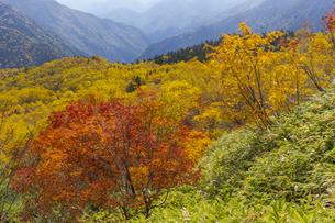 焼岳中腹から紅葉の風景の写真素材 [FYI04812830]