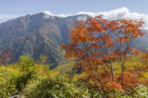 焼岳、紅葉のナナカマドと霞沢岳の写真素材 [FYI04812833]
