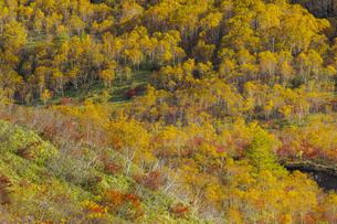 焼岳中腹から麓を眺めた紅葉の風景の写真素材 [FYI04812848]
