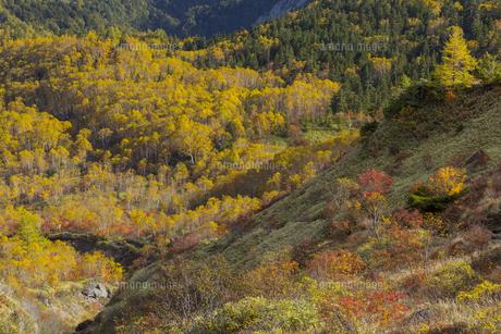 焼岳中腹から眺めた麓の風景の写真素材 [FYI04812851]