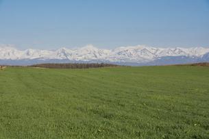 春の緑の牧草畑と残雪の山並み 十勝岳連峰の写真素材 [FYI04812861]