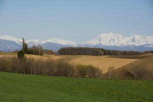 春の畑と残雪の山並み 十勝岳連峰の写真素材 [FYI04812865]