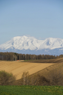 春の畑と残雪の山並み 十勝岳連峰の写真素材 [FYI04812866]