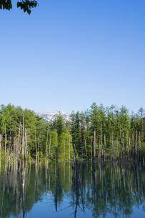 春の青空を映す青い池の水面 美瑛町の写真素材 [FYI04812873]