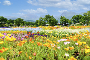 花の楽園風景 うららかな春の季節 美しい春彩畑の写真素材 [FYI04812902]
