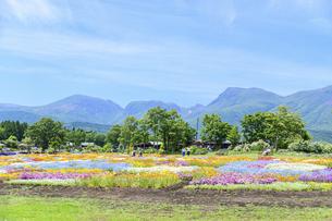 花の楽園風景 うららかな春の季節 美しい春彩畑の写真素材 [FYI04812907]