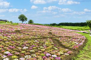 花の楽園風景 うららかな春の季節 美しい春彩畑の写真素材 [FYI04812909]