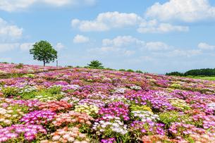 花の楽園風景 うららかな春の季節 美しい春彩畑の写真素材 [FYI04812917]
