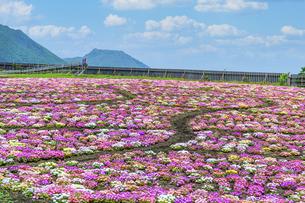 花の楽園風景 うららかな春の季節 美しい春彩畑の写真素材 [FYI04812921]