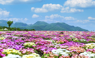 花の楽園風景 うららかな春の季節 美しい春彩畑の写真素材 [FYI04812930]