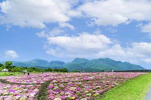 花の楽園風景 うららかな春の季節 美しい春彩畑の写真素材 [FYI04812934]
