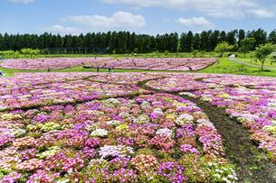 花の楽園風景 うららかな春の季節 美しい春彩畑の写真素材 [FYI04812938]