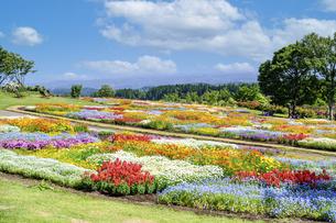 花の楽園風景 うららかな春の季節 美しい春彩畑の写真素材 [FYI04812944]