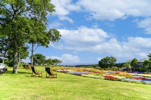花の楽園風景 うららかな春の季節 美しい春彩畑の写真素材 [FYI04812947]