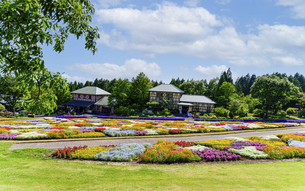 花の楽園風景 うららかな春の季節 美しい春彩畑の写真素材 [FYI04812963]