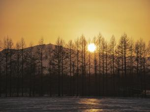 夕日と防風林の写真素材 [FYI04813042]