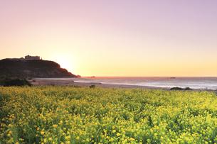 春の恋路ヶ浜に朝焼け空と菜の花の写真素材 [FYI04813128]