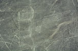 ナスカの地上絵 ペリカンの写真素材 [FYI04813563]