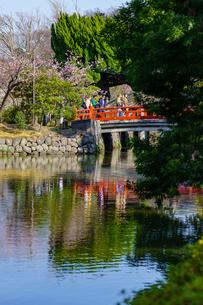 鶴岡八幡宮平家池と赤い橋の写真素材 [FYI04813597]